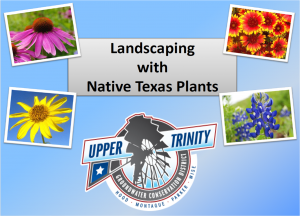 NAtivePlantsBook